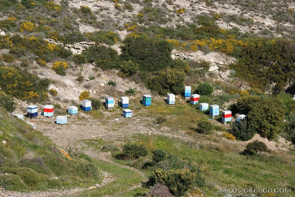 Beehives near Paliorema